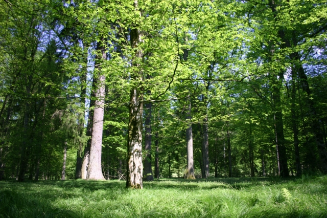 Joga Ruch Oddech - Starzyna - Ludzie i okolice